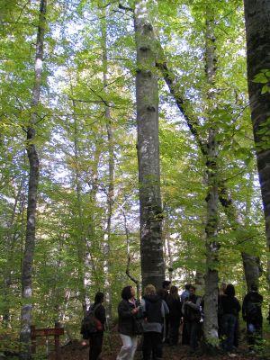 Yedigöller 2009